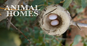 Tierisch Wohnen – Bild: PBS/Screenshot
