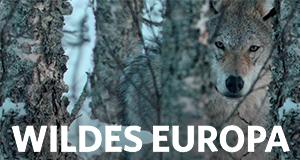Wildes Europa – Bild: Nat Geo Wild
