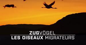 Zugvögel – Bild: arte