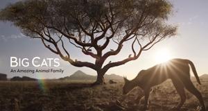 Raubkatzen – Eine faszinierende Tierfamilie – Bild: Sky1/Screenshot