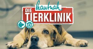 Hautnah: Die Tierklinik – Bild: MG RTL D