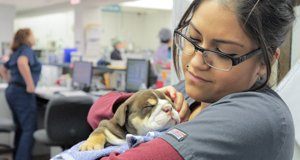 Animal Emergency Room – Bild: Corus® Entertainment Inc.