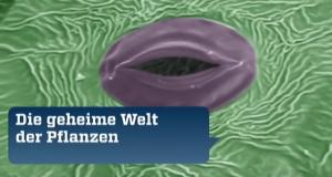 Die geheime Welt der Pflanzen – Bild: ZDF/Mona Lisa Production/France 5