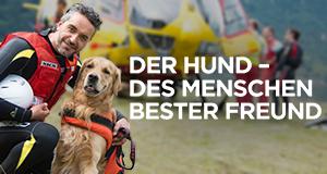 Der Hund – Des Menschen bester Freund – Bild: Discovery Communications