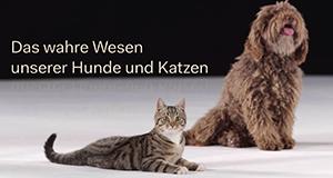 Das wahre Wesen unserer Hunde und Katzen – Bild: ZDF/Thomas Frischhut