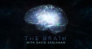 The Brain – Das menschliche Gehirn – Bild: PBS