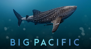 Big Pacific – Bild: NHNZ/PBS/CCTV9/ZDF Enterprises/Discovery International