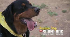 Super Dogs – Helfer in der Not – Bild: Animal Planet/Screenshot