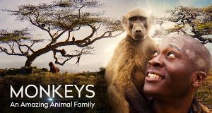 Affen – Eine faszinierende Tierfamilie – Bild: Sky One/Offspring Films