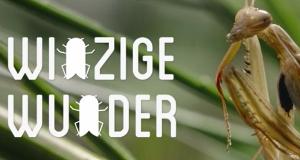 Winzige Wunder: Insekten – Bild: arte/ZDF