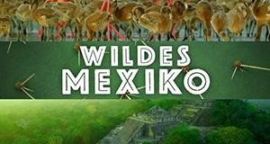Wildes Mexiko – Bild: BBC/polyband