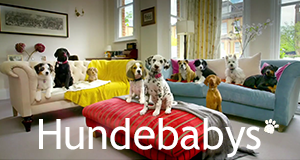 Hundebabys - Chaos auf vier Pfoten – Bild: BBC/Montage