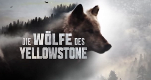 Die Wölfe des Yellowstone – Bild: National Geographic Channel