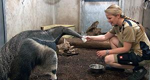 Frau Doktor und die wilden Tiere – Bild: HR