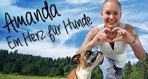 amanda ein herz für hunde