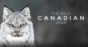 Ein Jahr in Kanadas Wildnis – Bild: CBC