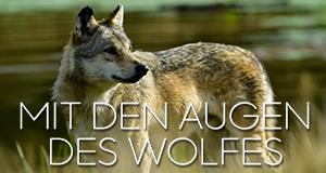 Mit den Augen des Wolfes – Bild: ServusTV/Ludovic Sigaud
