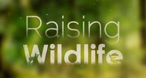 Raising Wildlife: Aufzucht in der Wildnis – Bild: Autentic Distribution/Screenshot