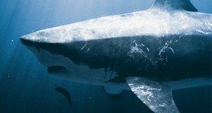 Von Monsterhaien und Riesenschlangen