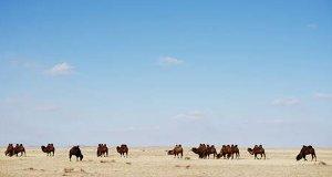 Wilde Mongolei – Bild: National Geographic