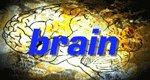 Brain – Wussten Sie schon…?