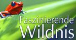 Faszinierende Wildnis – Bild: BBC
