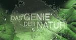 Das Genie der Natur
