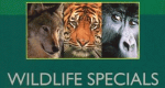 Wildlife Specials – Bild: BBC