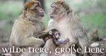 Wilde Tiere, große Liebe – Bild: arte