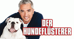 Der Hundeflüsterer – Bild: National Geographic Channel
