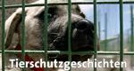 Tierschutzgeschichten – Bild: WDR