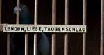 London, Liebe, Taubenschlag – Bild: ZDF