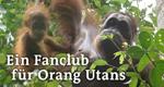 Ein Fanclub für Orang Utans – Bild: BR