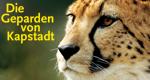 Die Geparden von Kapstadt – Bild: Oasis HD