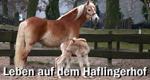 Leben auf dem Haflingerhof – Bild: SWR/NDR/Sequenz