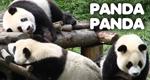 Panda Panda – Bild: ZDF/Discovery