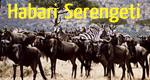 Habari Serengeti – Bild: BR/Tracy Robb