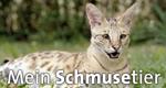 Mein Schmusetier – Bild: WDR/M. Bölk
