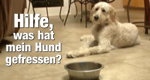 Hilfe, was hat mein Hund gefressen? – Bild: National Geographic Channel