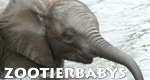 Zootierbabys – Bild: RBB/DOKfilm
