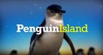 Die Insel der Zwergpinguine – Bild: 360 Degree Films