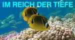 Im Reich der Tiefe – Bild: ZDF/© Christian Pétron