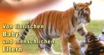 Von tierischen Babys und menschlichen Eltern – Bild: Anixe (Screenshot)