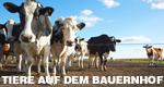 Tiere auf dem Bauernhof – Bild: WDR