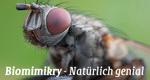 Biomimikry – Natürlich genial! – Bild: arte/gebrueder beetz filmproduktion