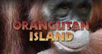 Insel der Orang-Utans – Bild: Discovery Communications, LLC.