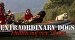 Extraordinary Dogs – Helden auf vier Pfoten – Bild: VOX/back2back/JM