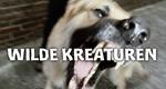Wilde Kreaturen – Bild: RTL II