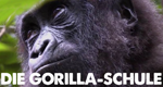 Die Gorilla-Schule – Bild: Discovery Communications, LLC.