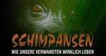 Schimpansen - Wie unsere Verwandten wirklich leben – Bild: VOX/BBC